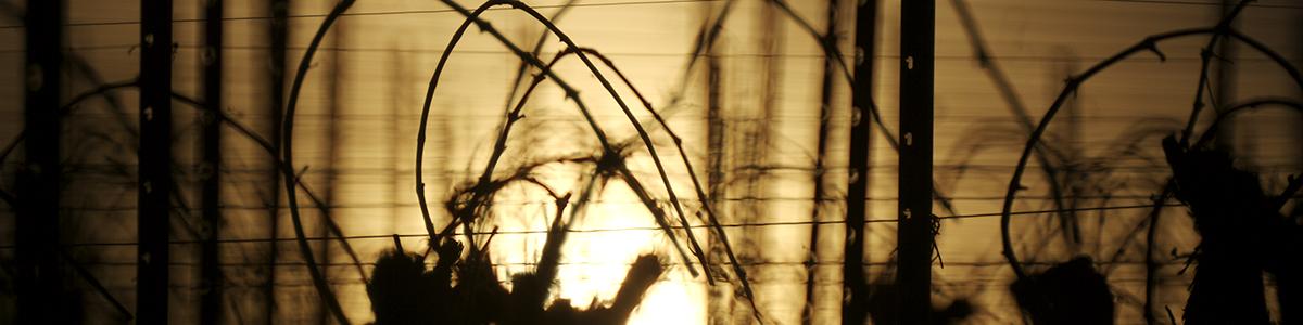 Appenheim Sonnenuntergang Weinberg ©2018 Markus Müller-Heidelberg